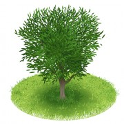 Link toSpring green tree design vector graphic 04 free