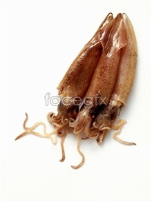 picture material food Squid