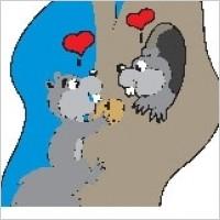 Link toSquirrels in love