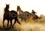 Link toSteppe horse psd