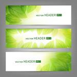 Link toStylish leaf banner vector