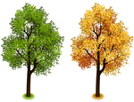 Link toSummer and autumn tree design vector