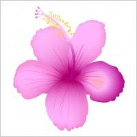 Link toSummer flower