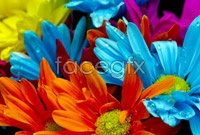 Link toSummer open flowers hd picture