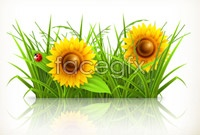 Link toSunflower and chamomile vector graphics