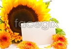 Link toSunflower card psd