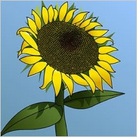 Link toSunflower girasol