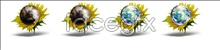 Link toSunflower globe icon