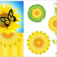 Link toSunflower vector
