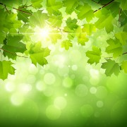 Link toSunlight and green leaf nature background 01 free