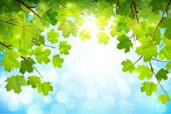 Sunlight tree vector background