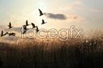 Link toSunset birds psd