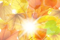 Link toSunshine and autumn leaves background vector