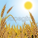 Link toSunshine golden wheat field vector