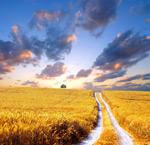 Link toSunshine wheat field 3 psd