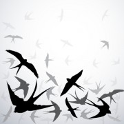 Link toSwallow silhouette with gray background vector free
