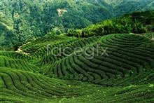 Link tohd in pictures landscape forest Tea