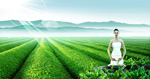 Link toTea garden beautiful scenery psd