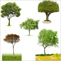 Link toThe five kinds of trees psd