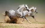 Link toThe horses of pentium 2 psd