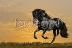 Link toThe horses of pentium 3 psd