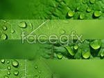 Link toThe leaves covered with water drops psd