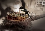 Link toThe magpie nest psd
