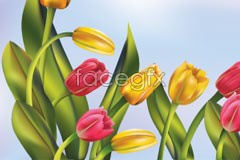 Link tovector tulip yellow and red The