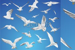 vector sky the in fly seagulls The