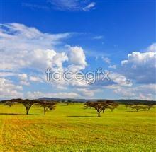 Link toThe vast grassland pictures
