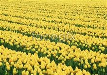 Link toThousands of flowers 533