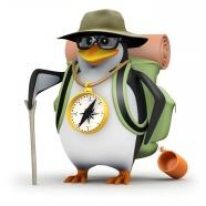 Link toThree dimensional cartoon penguin pictures
