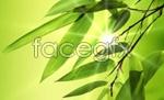 Link toThrough the sun's bamboo psd