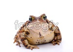 Link toToad picture material psd