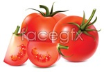 Link toTomato vector material