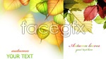 Link toTranslucent bright autumn leaves psd