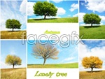 Link toTree of seasons psd