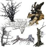 Link toTrees dead wood deadwood psd