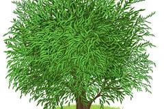 Link toTrees flourish in cartoon vector