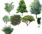 Trees trees hd footage psd