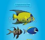 Tropical marine fish vector