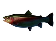 Link toTrout graphics vector free