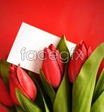 Link toTulip flower 5 psd