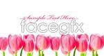 Link toTulip flower close-up psd