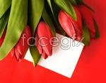 Link toTulip flowers 1 psd