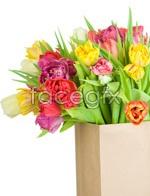 Link toTulip flowers psd