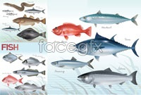 Link toVariety of bottom fish vector art s