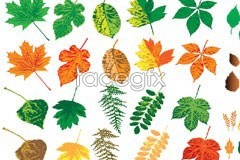 Link tovector foliage colorful of Variety