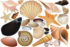 Link toVarious shells vector