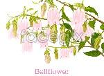 Link toVector bellflower